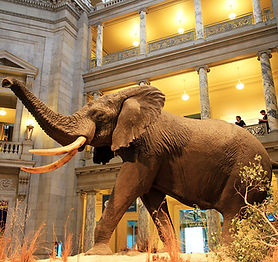 1200px-USA-National_Museum_of_Natural_Hi