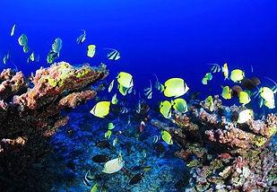 BELIZE Barriere de corail.jpg