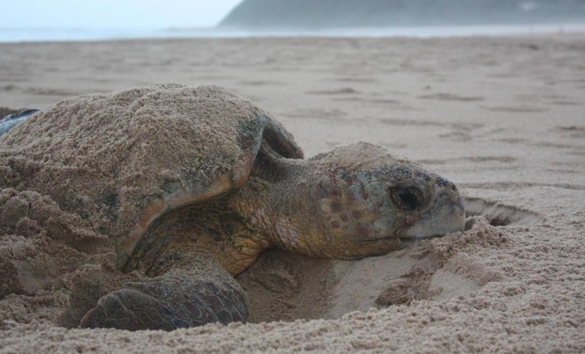 Mozambique tortue.jpg