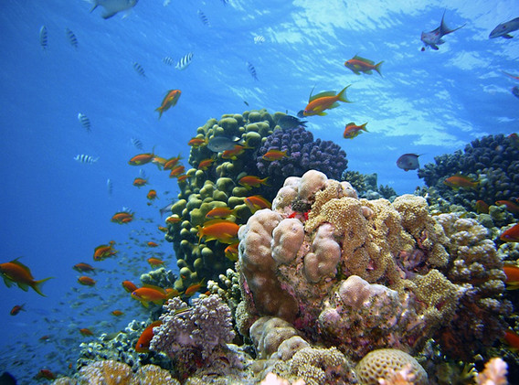 JORDANIE Aqaba coraux.jpg