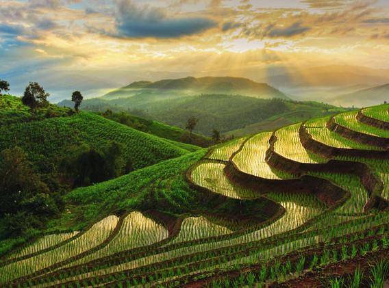 Thailande riz en terrasse.jpg