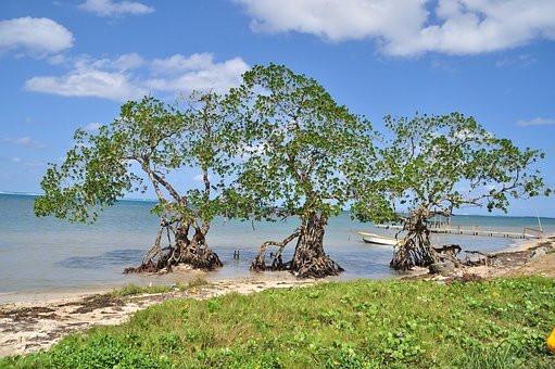 HONDURAS Ile de Roatan.jpg