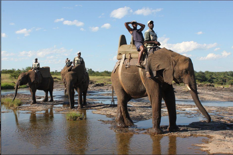 ZAMBIE Safari éléphants.jpg
