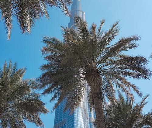 DUBAI Khalifa et palmiers.jpeg