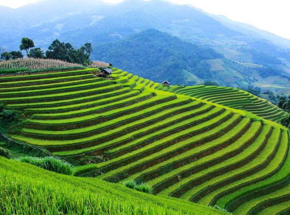 Thailande Rizières.jpg