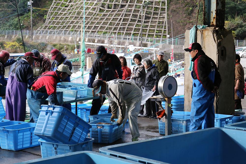漁港 漁師