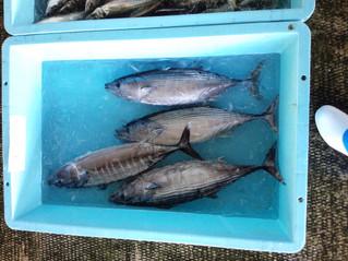 キツネと呼ばれる魚