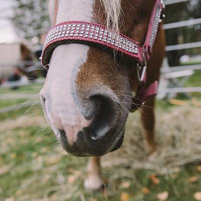 Hevoset Forssassa