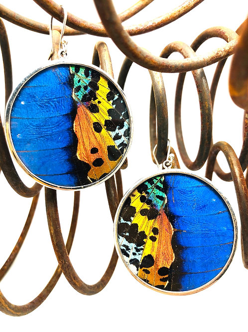 Bright Blue Butterfly Round Earrings