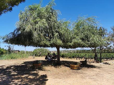 Wine Tasting Algarve
