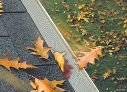 Leaves_feuilles_web