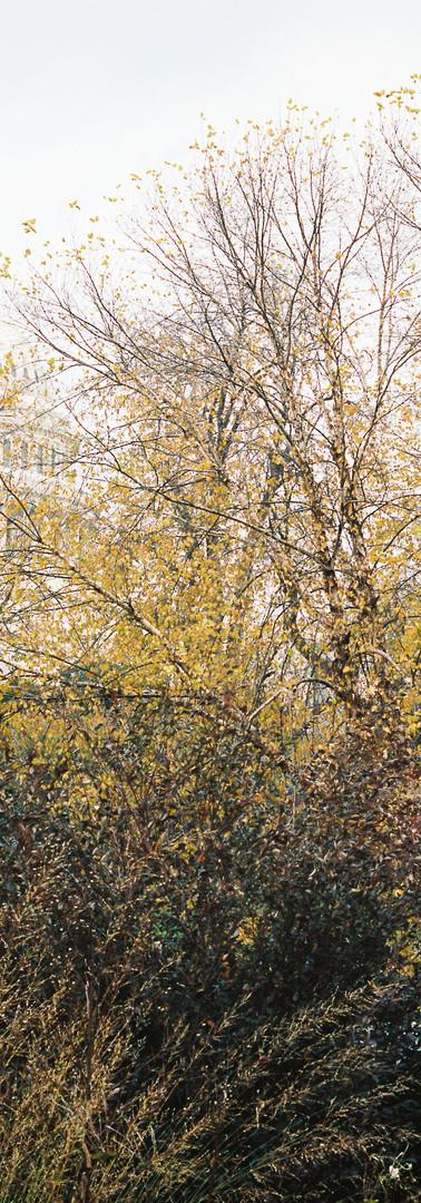 Liminal Season