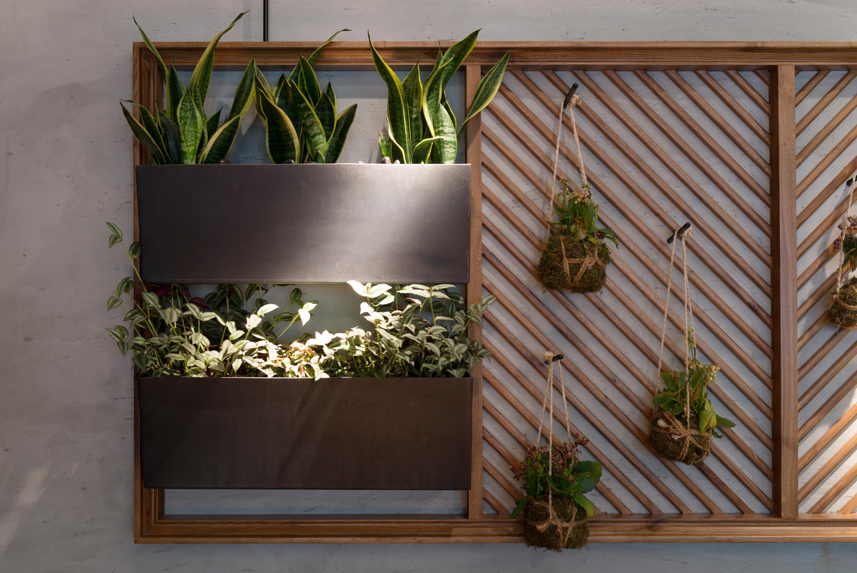 framed plants