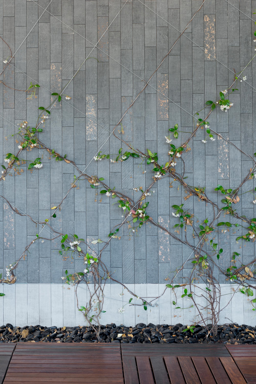 climber plant - X style