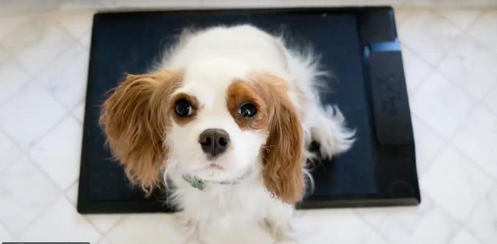 Smart Dog Training Barking Mat with dog sitting on it