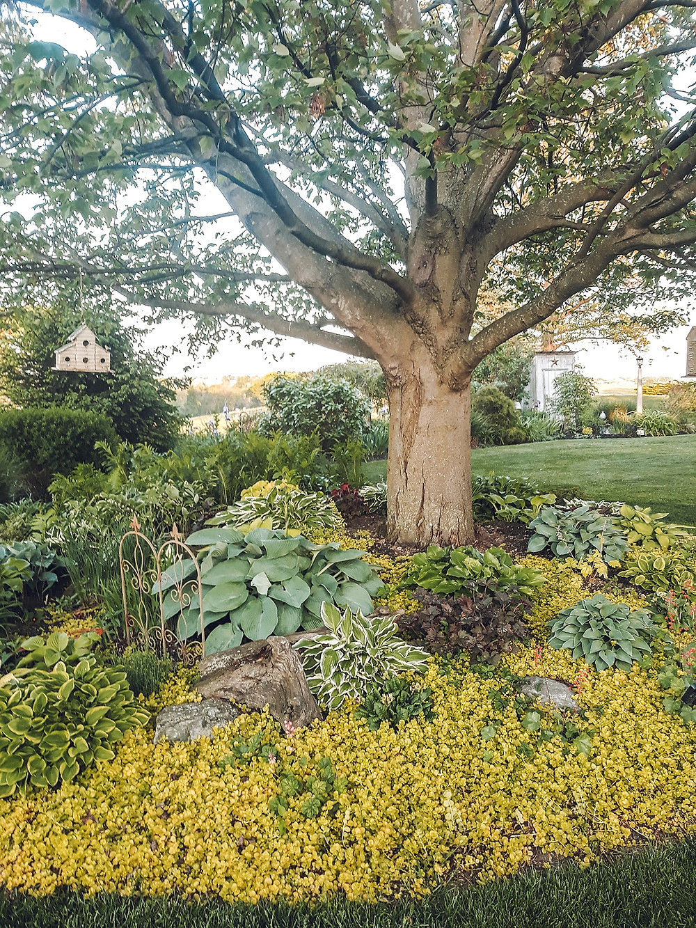 Gardening tips, back yard ideas, back yard gardening, landscaping, landscaping ideas, landscaping tips, how to landscape, how to make a flower bed, how to design a flower bed, how to choose plants, planting tips, planting ideas, garden styling, outdoor living, outdoor planting tips, how to start a garden, companion planting, gardening lessons, the rural legend