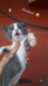 kedi sahiplendirme ilanları