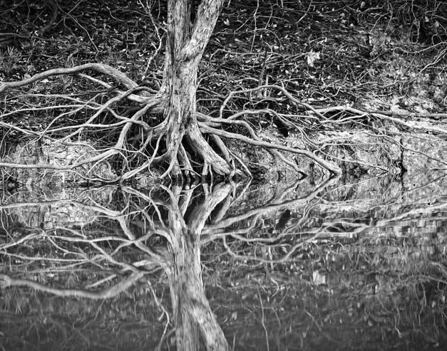 Tentacles, Amazon river, Brazil