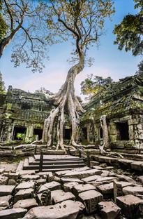 Nature's Domination, Angkor Wat, Cambodia