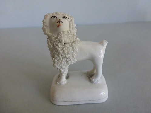 19thc. Toy Staffordshire of Poodle