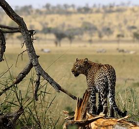 Singita-Grumeti-Wildlife-Report-August-5