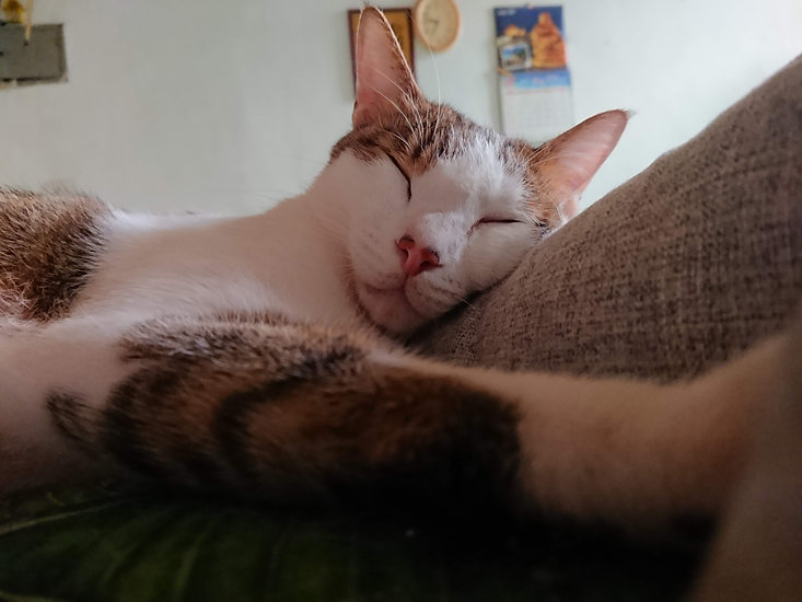 這是一隻可愛貓貓