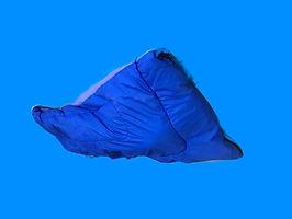 藍藍怪 Giant Blue