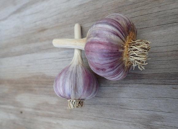Deerfield Garlic