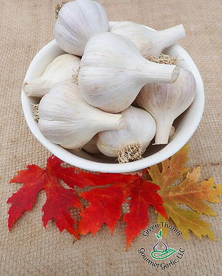 bowl of garlic bulbs