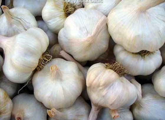 Thermadrone Garlic