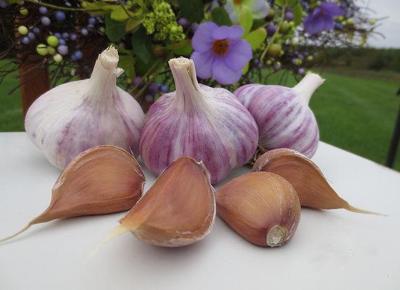 Metechi Garlic