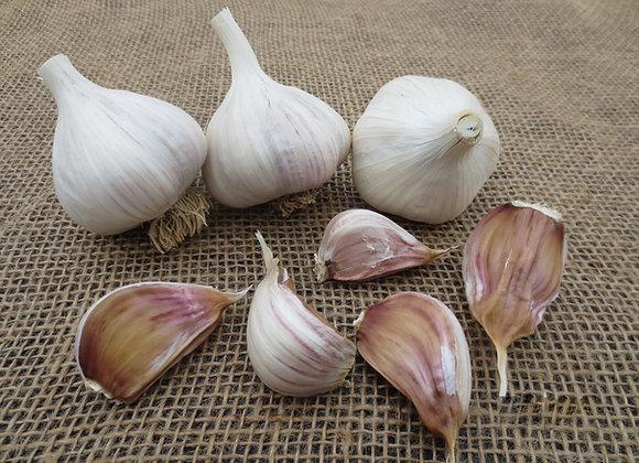 Asian Tempest Garlic
