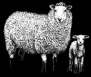 Sheep pic.PNG