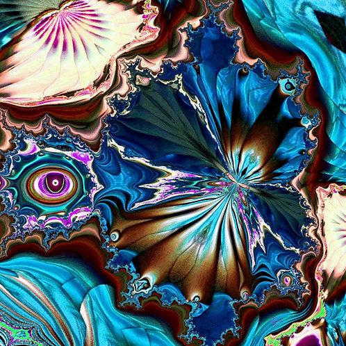 Sea Shells THA9MP