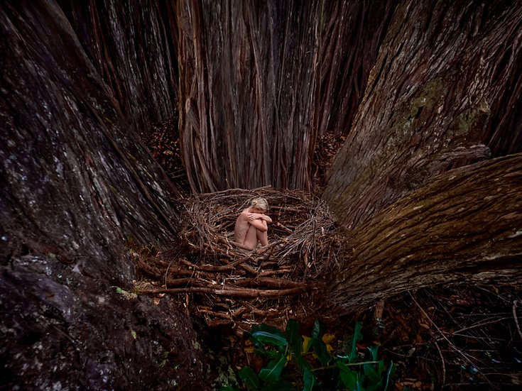 HAMÄKUA FOREST