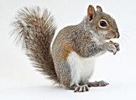 emotional-support-squirrel.jpg