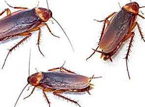 roaches-300x300.jpeg