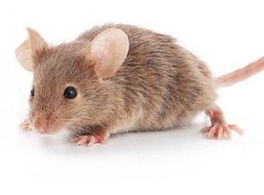 mouse-300x300.jpeg