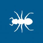 ants, fire ants, sugar ants, kitchen ants
