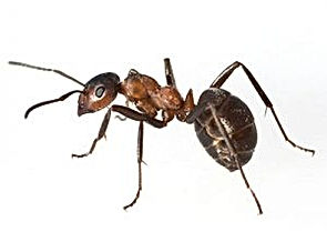 Ants1-300x300.jpg