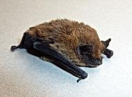 marietta-bats-in-the-attic.jpg