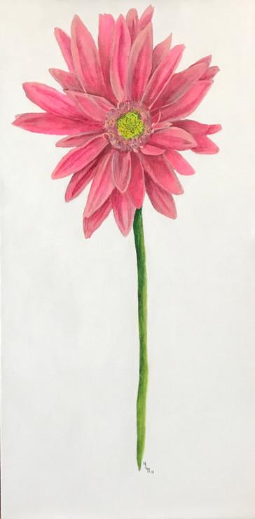 Oopsie Daisy 12x24 Acrylic on Canvas HLH Art