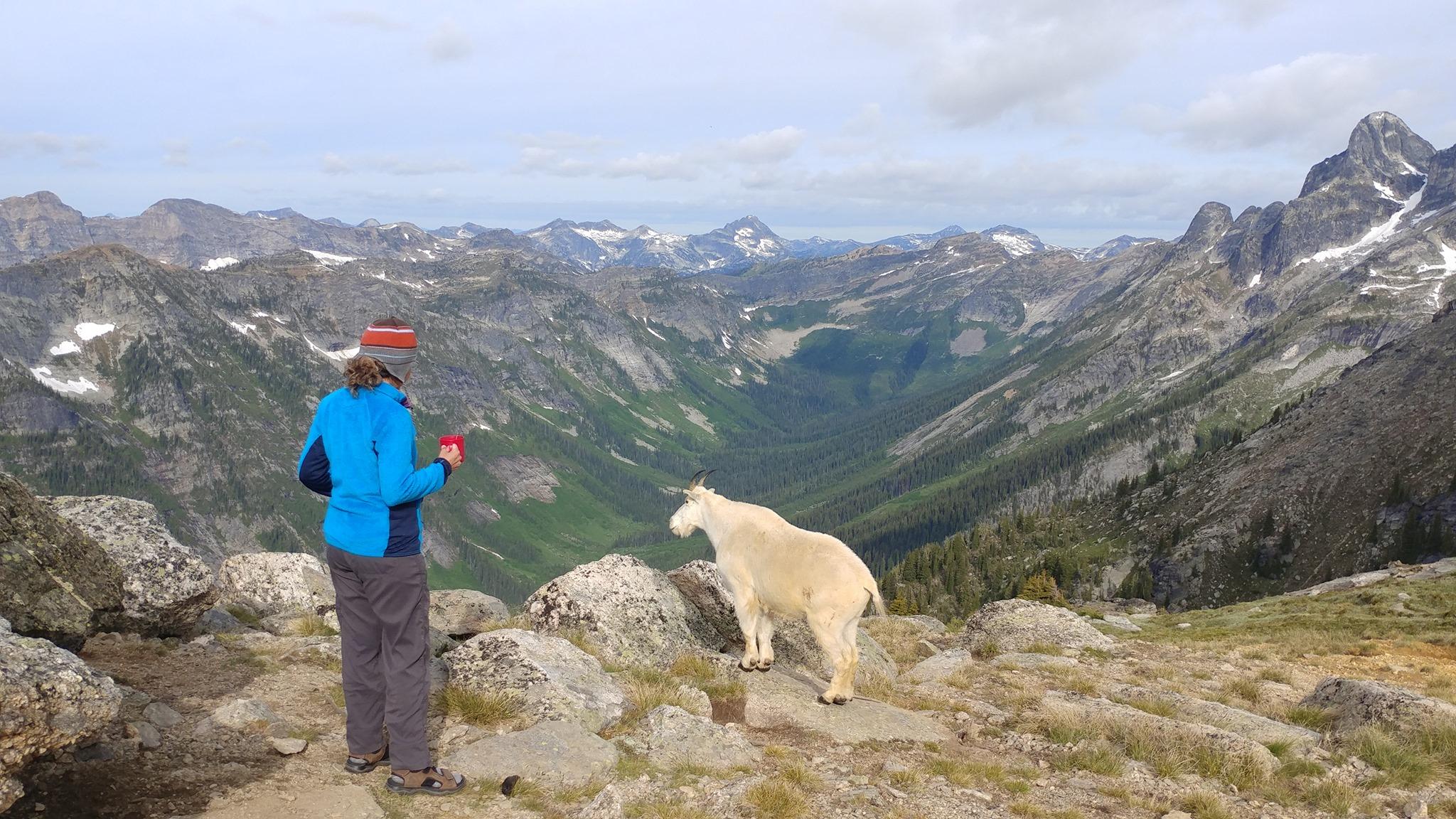 Canada goat2