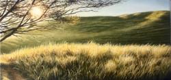 Okiritoto Fields