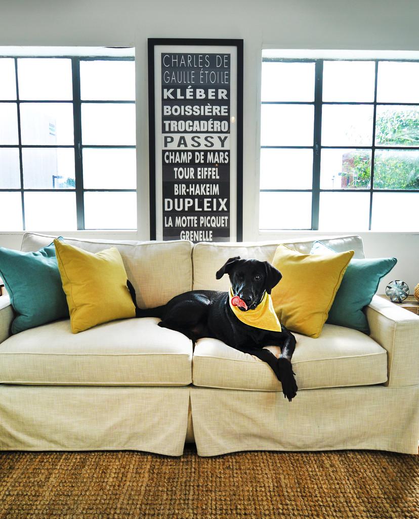 LiveSmart Ultra Dog on Sofa