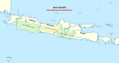 Arborophila javanica distribuzione.png