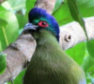 Cloro www.tripadvisor.co za.jpg
