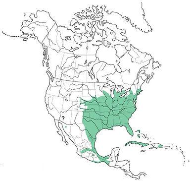 Colinus vriginanus original map - www.re