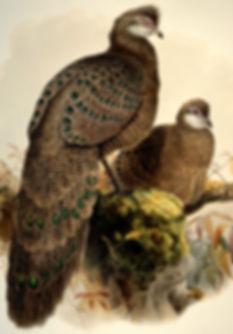 www.rareandunusual com - Copia.jpg