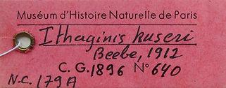 Kuseri descritto da Beebe 1912 -  3.jpg